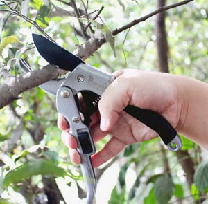 Amazon Deal: Pruning & Garden Shears Only $9.99 (Regularly $15.99)